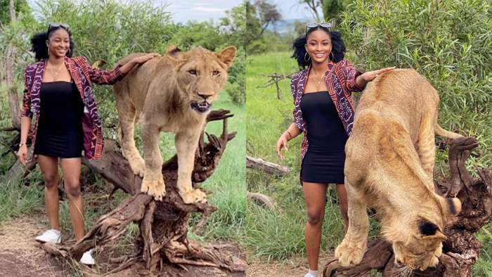BBNaija's Kim Oprah seen playing with lion while on holiday in Bazaruto, Mozambique