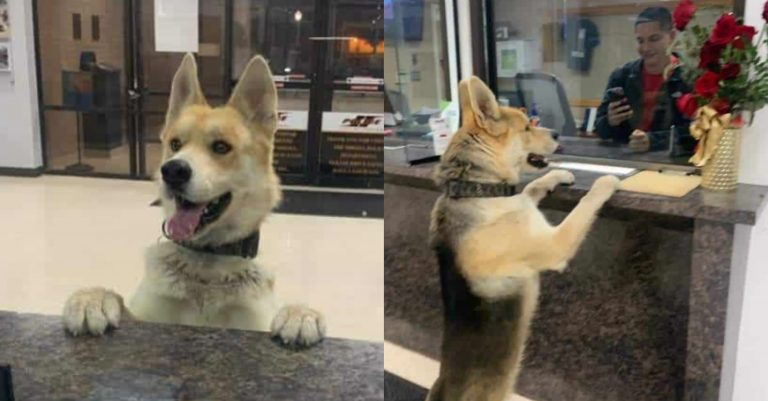 Clever Dog goes to the Police Station to report himself Missing